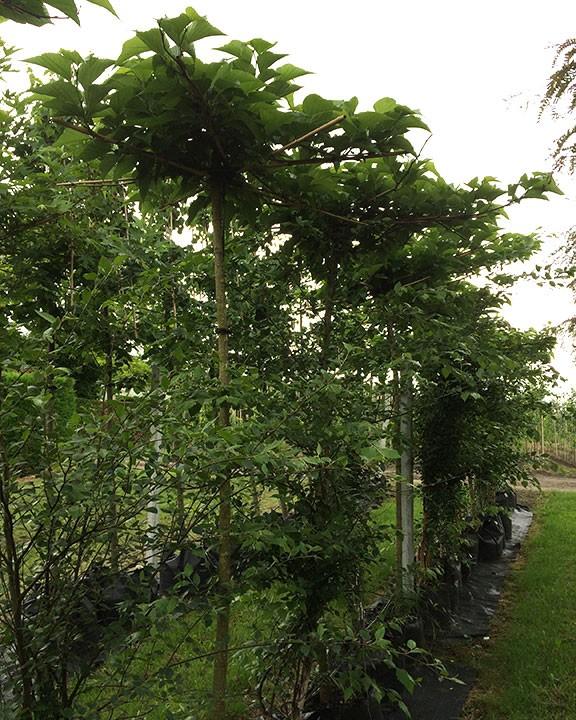 fruitboomsoorten