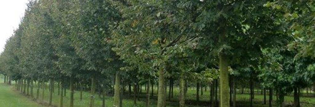 bomen-3