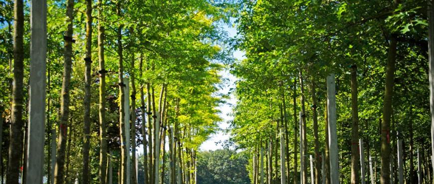bomen-verplaatsen-3
